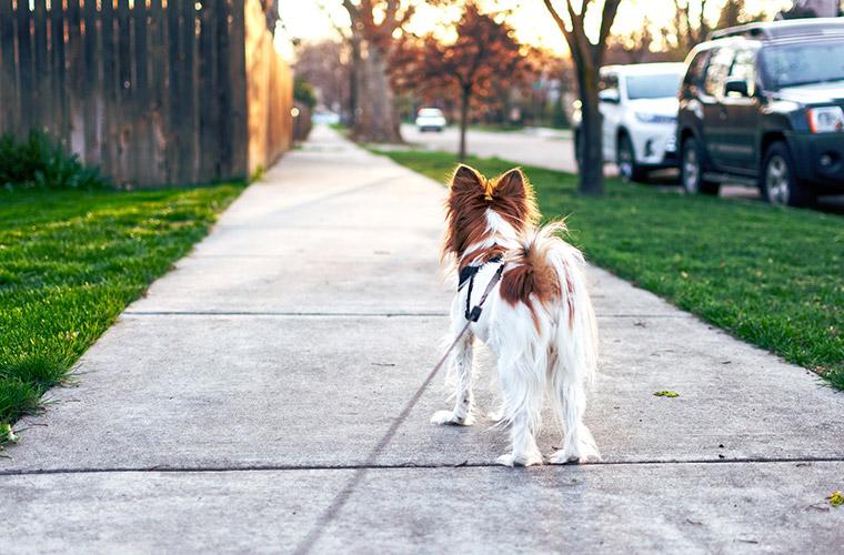 Tierhalterhaftpflichtversicherung im Versicherungsbüro Schäfferer